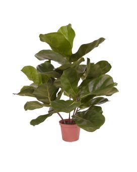 Maxifleur Kunstpflanzen für beeindruckendes Arrangement